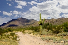 northwest-side-tucson-arizona-trails-1