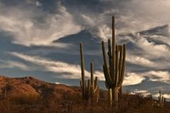 northwest-side-tucson-arizona-trails-2