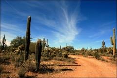 northwest-side-tucson-arizona-trails-3