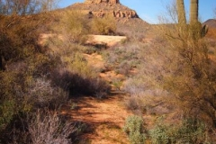 northwest-side-tucson-arizona-trails-4