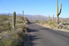 northwest-side-tucson-arizona-trails-7