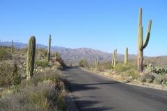 northwest-side-tucson-arizona-trails-8