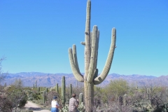 northwest-side-tucson-arizona-trails-9