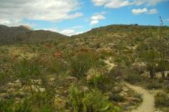 la-milagrosa-trails-tucson-arizona-9