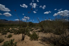 west-desert-trails-tucson-arizona-4