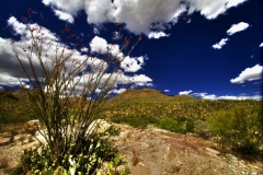 west-desert-trails-tucson-arizona-5