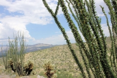 west-desert-trails-tucson-arizona-8