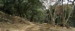 thumbs_Peppersauce-Cave-Trail-6