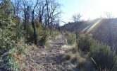 thumbs_Willow-Springs-2013Old-Pueblo-Trail-1